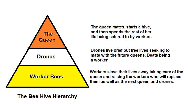 Bee Hive Hierarchy