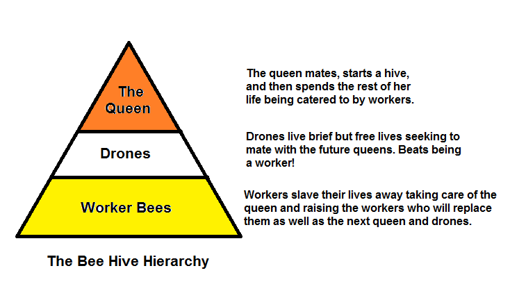 Bee Hive Hierarchy