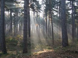 File:Crepuscular rays in the woods of Kasterlee, Belgium.jpg ...